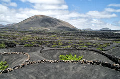 Vineyards in La Geria, Lanzarote, Spain. Royalty Free Stock Photography