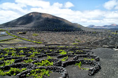 Vineyards in La Geria, Lanzarote, Spain. Royalty Free Stock Photo
