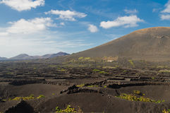 Vineyards at La Geria Valley, Lanzarote Royalty Free Stock Image