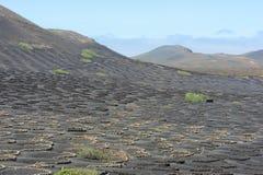 La Geria Valley, Lanzarote Island, Canary Islands, Spain Royalty Free Stock Photo