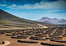 Vineyards in La Geria,. Vineyards in La Geria on Lanzarote - canary islands, Spain Stock Photos