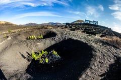 Vineyards of La Geria on volcanic soil Stock Images
