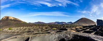Vineyards of La Geria on volcanic soil Stock Photos