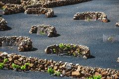 Vineyards of La Geria on volcanic soil, Lanzarote Royalty Free Stock Photo