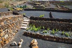 Vineyards of La Geria on volcanic soil, Lanzarote. Famous vineyards of La Geria on volcanic soil, Lanzarote Island, Spain stock photo