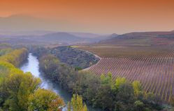 Vineyards in La Rioja, Spain. Stock Images