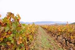 Vineyards in La Rioja, Spain. Royalty Free Stock Image