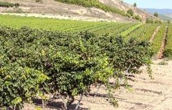 Vineyards in La Rioja Stock Images