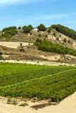 Vineyards in La Rioja Stock Photos