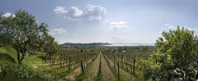 Vineyards at Lake Balaton royalty free stock photos