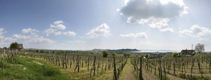 Vineyards at Lake Balaton Stock Photos