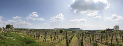 Vineyards at Lake Balaton Stock Photos