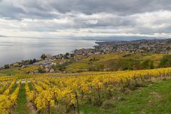 Vineyards and lake Leman 2. Golden grape vines. Beautiful view on the vineyards, Lavaux region, cloudy sky scape, part of Alps and lake Leman on the background royalty free stock photography