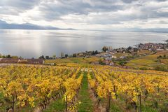 Vineyards and lake Leman 3. Golden grape vines. Beautiful view on the vineyards, Lavaux region, cloudy sky scape, part of Alps and lake Leman on the background stock photography