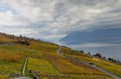 Vineyards and lake Leman 7. Golden grape vines. Beautiful view on the vineyards, Lavaux region, cloudy sky scape, part of Alps and lake Leman on the background royalty free stock images