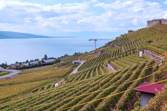 Vineyards by lake Leman. Just outside Geneva in Switzerland on a cloudy day Stock Image