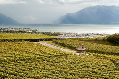 Vineyards by lake Leman Royalty Free Stock Photo