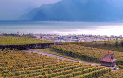 Vineyards by lake Leman. Just outside Geneva in Switzerland on a cloudy day Royalty Free Stock Image