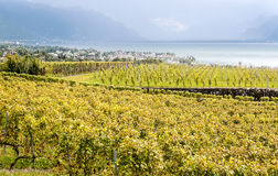 Vineyards by lake Leman. Just outside Geneva in Switzerland on a cloudy day Royalty Free Stock Photo