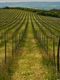 Vineyards landscape. Panorama lines pattern stock photography