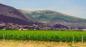 Vineyards and landscape of the city of Trebinje, Bosnia and Herzegovina. Stock Photography