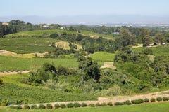 Vineyards landscape in Constantia valley Stock Photos