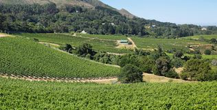 Vineyards landscape in Constantia valley Royalty Free Stock Photo