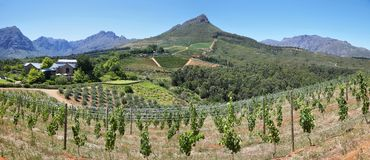Vineyards landscape from Delaire Graff state Stock Photos