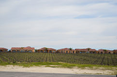 Vineyards Landscape with houses Royalty Free Stock Photos