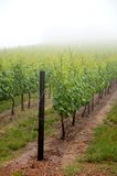 Vineyards Royalty Free Stock Photo
