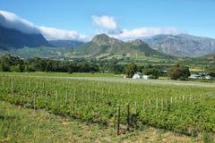 Vineyards landscape near Franschhoek Stock Photography