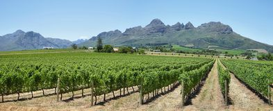 Vineyards landscape near Franschhoek Stock Image