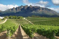 Vineyards landscape near Wellington. South Africa stock image
