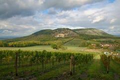 Vineyards landscape. Panorama lines pattern royalty free stock photo