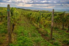 Vineyards landscape. Panorama lines pattern stock images