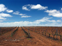Vineyards. Landscape with vineyards in southern Spain stock photo