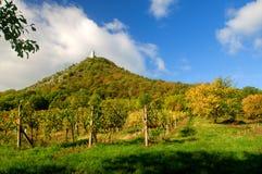 Vineyards landscape. Panorama lines pattern stock photography