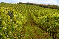 Vineyards landscape. Panorama lines pattern stock photos
