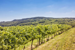 Vineyards landscape in Wachau Stock Image