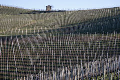Vineyards of the Langhe hills, Italy Stock Photo