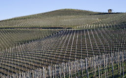 Vineyards of the Langhe hills, Italy Royalty Free Stock Images