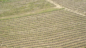 Vineyards of the Langhe hills, Italy Royalty Free Stock Photos