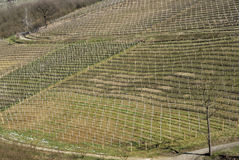 Vineyards of the Langhe hills, Italy Stock Photos