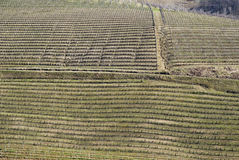 Vineyards of the Langhe hills, Italy Stock Images