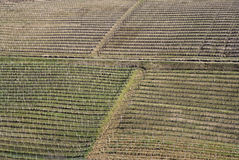 Vineyards of the Langhe hills, Italy Royalty Free Stock Photo