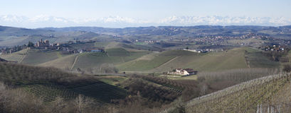 Vineyards of the Langhe hills, Italy Stock Image