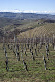 Vineyards of the Langhe hills, Italy Stock Photography