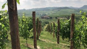 Vineyards on the Langhe Hills near La Morra, Piedmont - Italy stock video