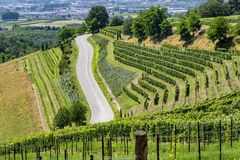 Vineyards in the Langhe near Barbaresco. And Alba, Cuneo, Piedmont, Italy, at summer stock images