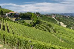 Vineyards in the Langhe near Barbaresco. And Alba, Cuneo, Piedmont, Italy, at summer stock image